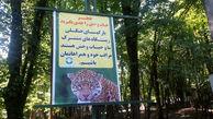 خطر حضور حیوانات وحشی در تفرجگاه های جنگلی گرگان