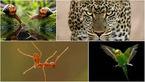 شکار لحظه ها از حیوانات مختلف در ژست های دیدنی و خنده دار +گالری عکس
