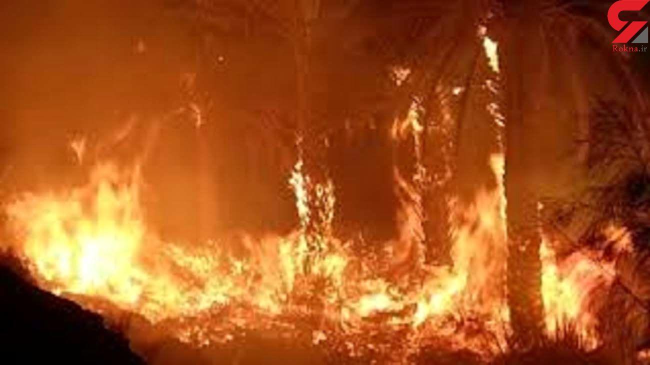 شناسایی عاملین آتش سوزی اراضی تنگ فاریاب مهر