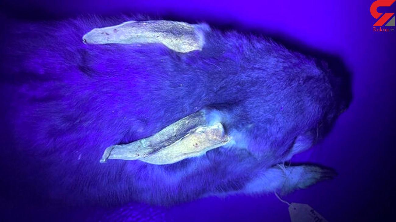 حیواناتی که در تاریکی میدرخشند