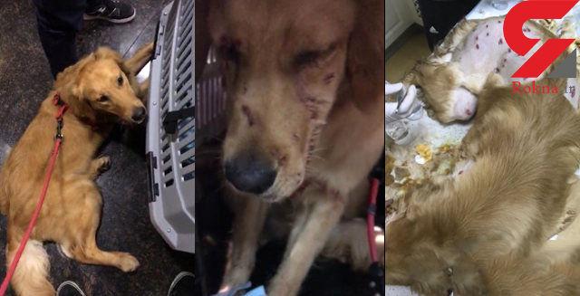 انتشار تصاویر این سگ ، باعث خشم میلیون ها کاربر اینترنت شد + عکس