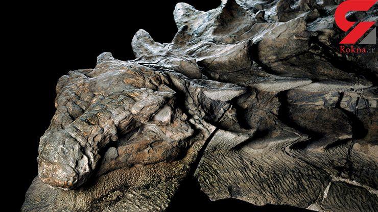 فسیل دایناسور 130 میلیون ساله کشف شد+عکس
