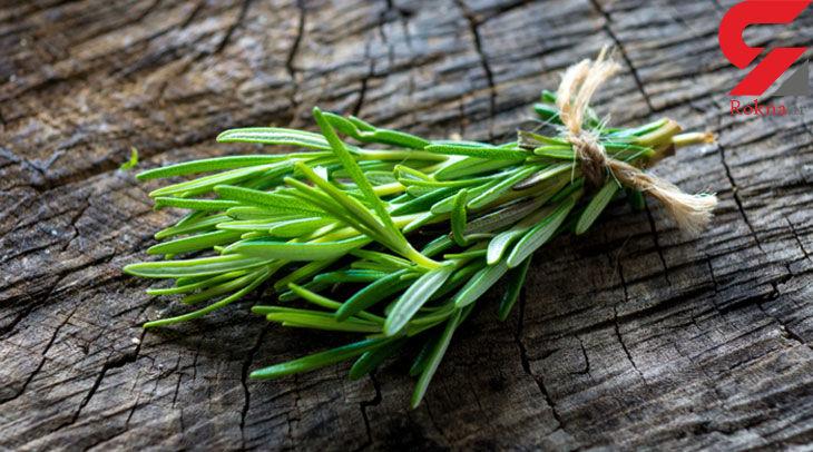 درمان سفیدی مو با گیاهی شگفت انگیز
