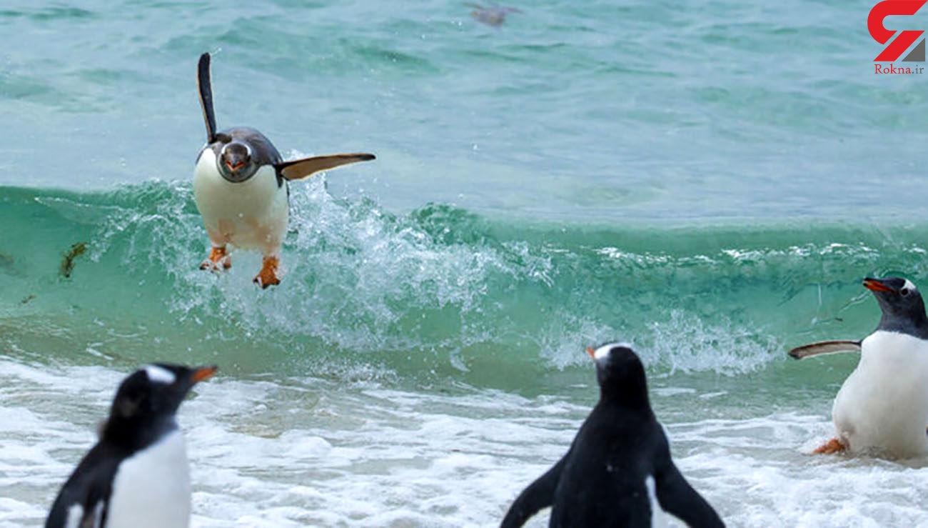 عکس های بامزه این حیوانات را ببینید