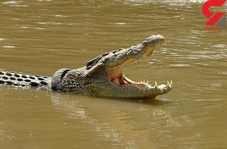 این تمساح بیچاره 3 سال است که در لاستیک موتورسیکلت اسیر است ! + تصاویر