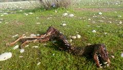 پشت پرده ماجرای کشف لاشه دایناسور در خوزستان! + عکس