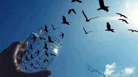آمار زندانیان آزادی البرز