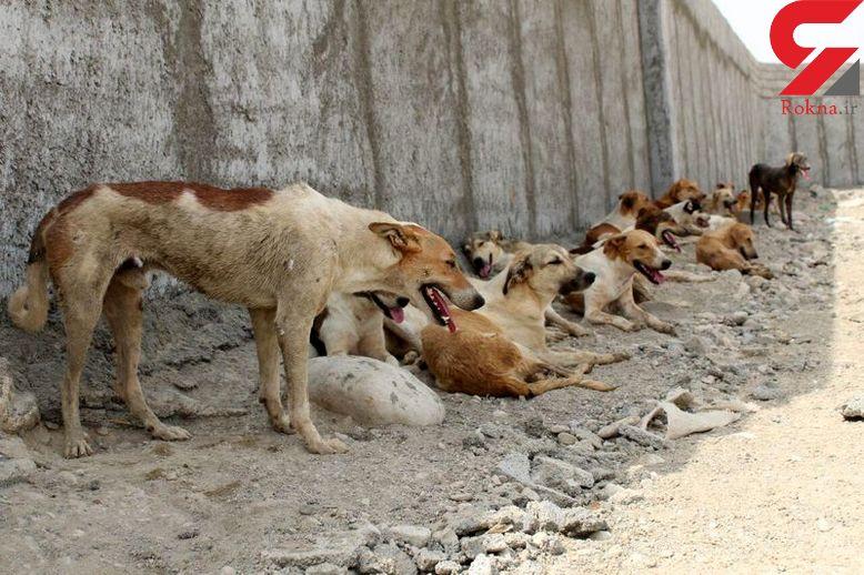 سگ های ولگرد 6 تهرانی را تیکه پاره کردند