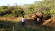 فراری دادن فیل با دست خالی توسط یک مرد + فیلم