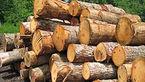 کشف 9 تن چوب قاچاق در سنقروکلیایی/ یک نفر دستگیر شد
