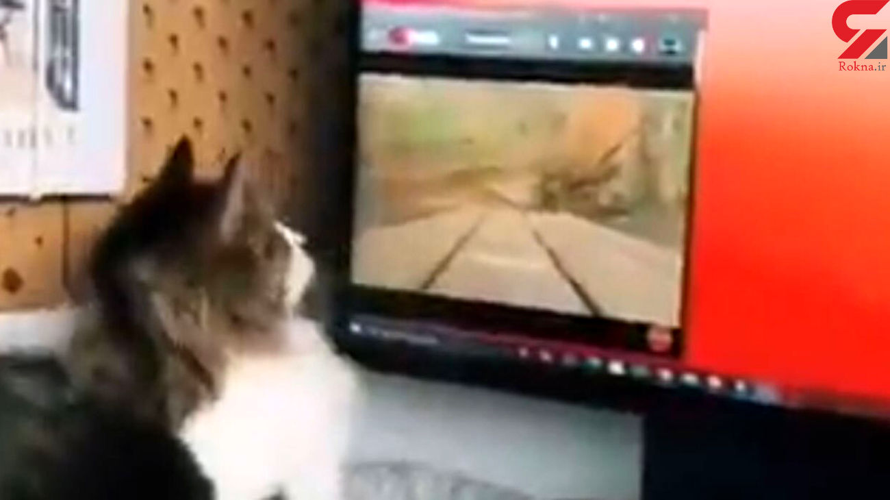 این گربه خانگی عاشق فیلم است + فیلم