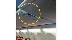 وحشت مسافران از موجود خطرناکی که از سقف هواپیما آویزان بود+عکس