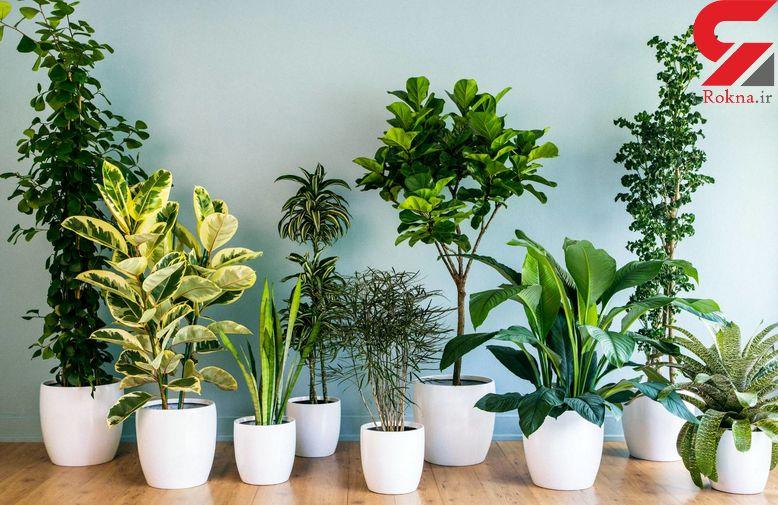 چگونه از گیاهان آپارتمانی مراقبت کنیم؟