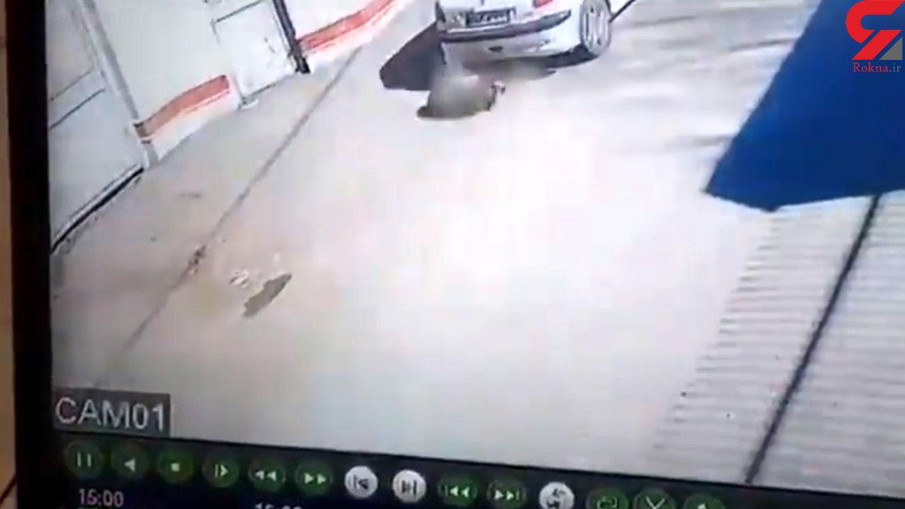 فیلم / سگ کشی در فردیس کرج / راننده این پژو را می شناسید؟!
