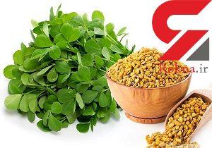 درمان پوکی استخوان با دانه های یک گیاه شگفت انگیز