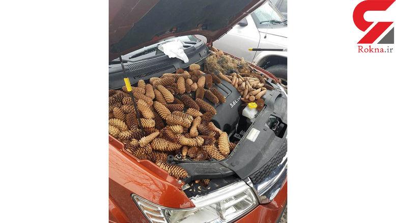 ببینید سنجابها با این ماشین چه کردند!+ عکس
