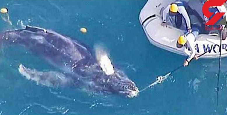 نجات بچه نهنگ از درون کیسه زباله + عکس