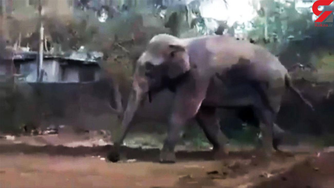 فیلم لحظه حمله حیوان غول پیکر به خانههای مردم روستا + فیلم