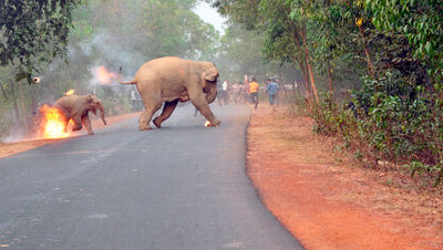 عکس هایی که برنده جایزه عکاسی حیات وحش آسیا شد