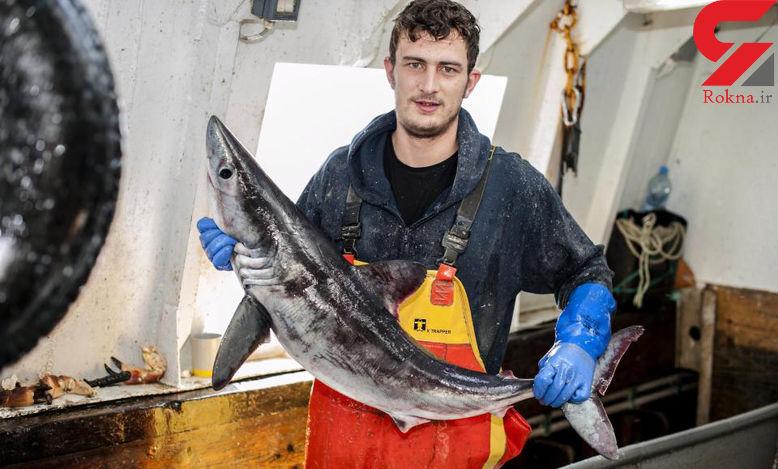 حمله کوسه سفید 2 متری به ماهیگیر جوان + عکس