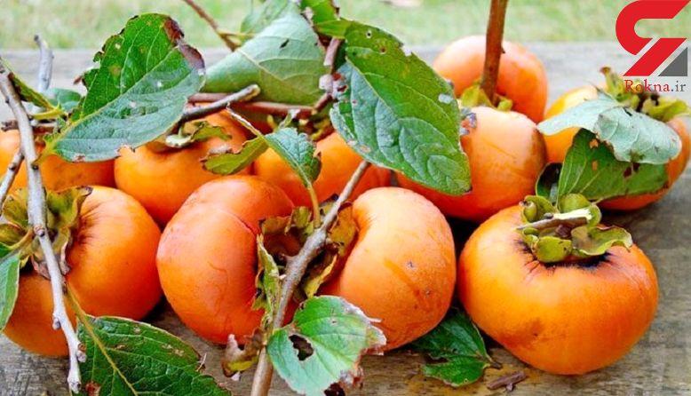 درمانگر نارنجی پاییز را بشناسید