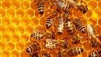 دستگیری دو پسر شرور به خاطر قتل نیم میلیون زنبور عسل