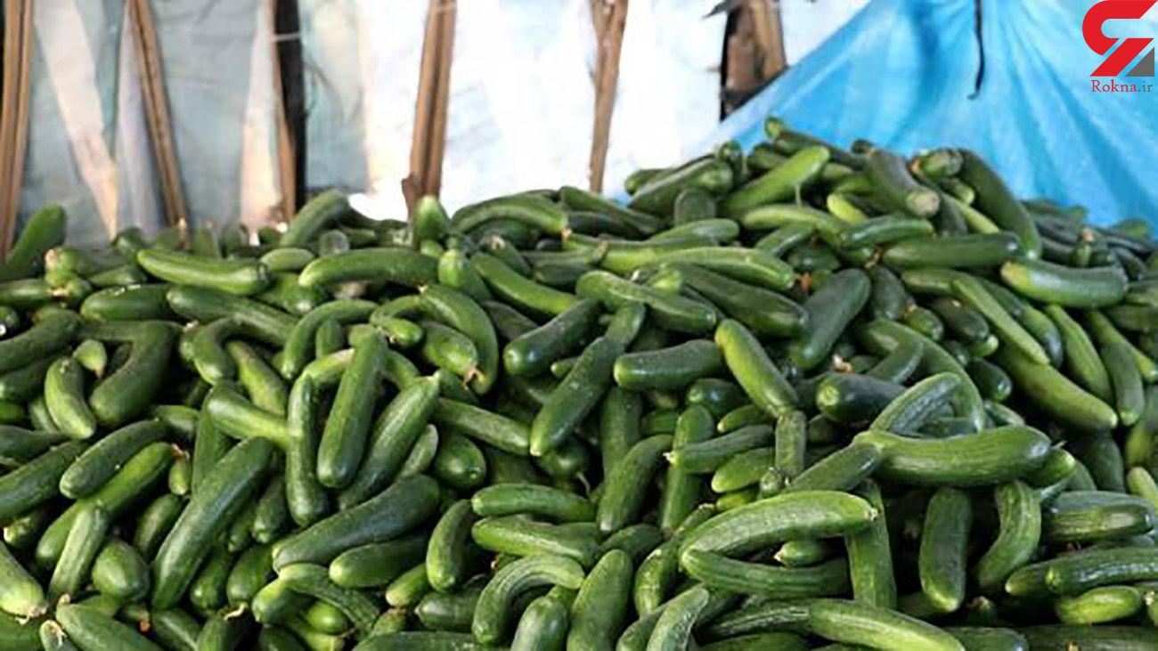 افزایش باور نکردنی قیمت خیار در بازار!