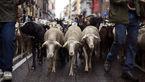 رژه گوسفندان در خیابان های شهر +تصاویر