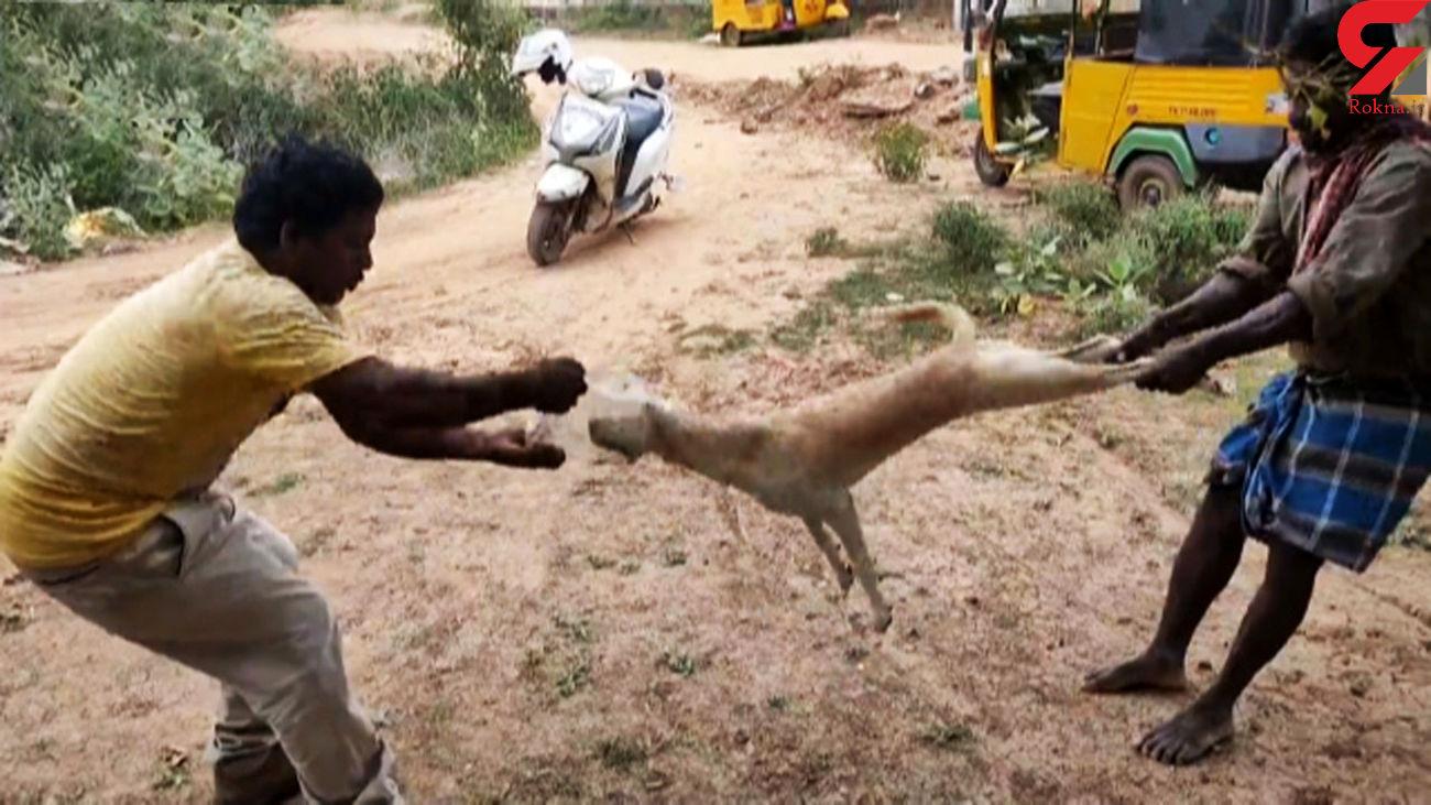 نجات عجیب سگ که سرش در دبه پلاستیکی گیر کرده بود + فیلم