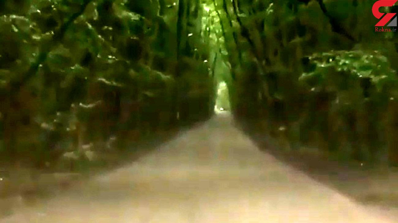 جنگل گیسوم و زیبایی های آن + فیلم