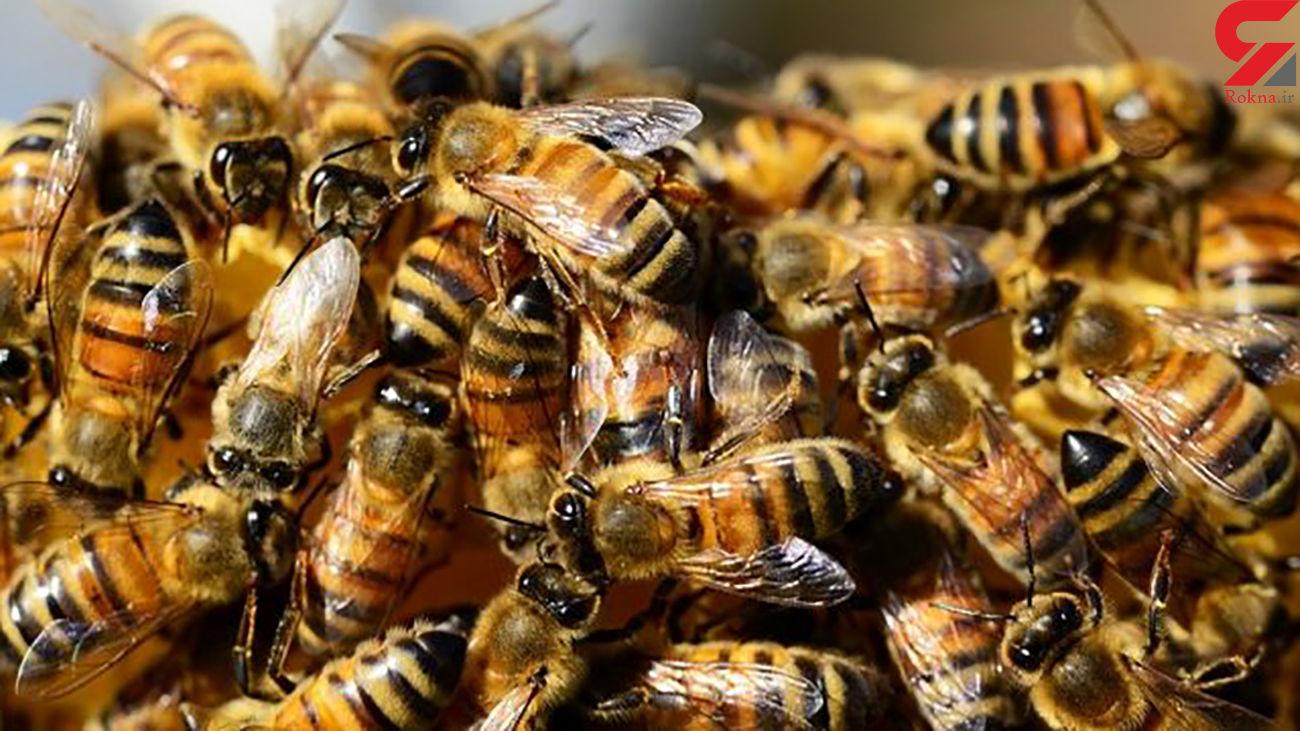 خواص نیش زنبور عسل چیست؟