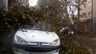 سقوط درخت بر روی 2 خودرو در پی وزش باد شدید در رشت