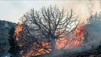 آتش سوزی 103 هکتار منابع طبیعی و جنگل های استان سمنان