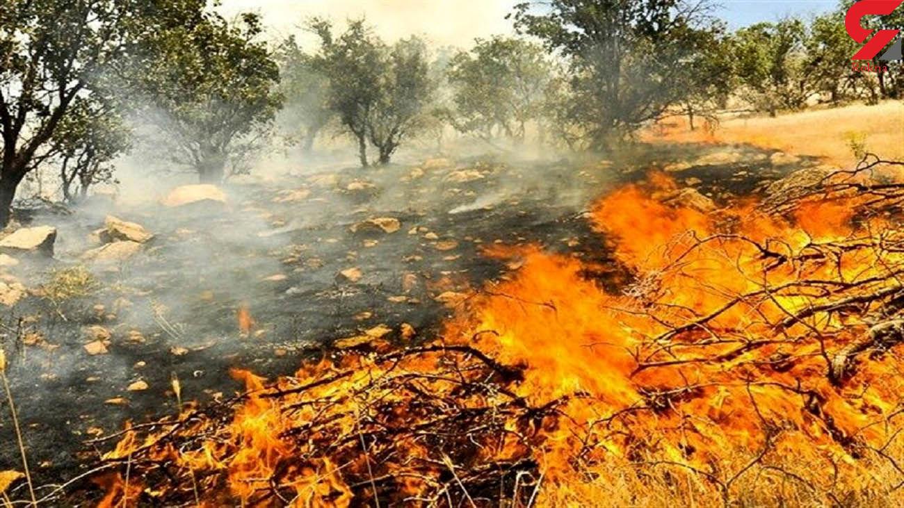 آتشبار دیگر به جان جنگل های خائیز افتاد+ فیلم