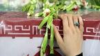"""بازگشت پیکر شهید """"عزیزالله بهاروند"""" پس از 36 سال/ جزئیات تشییع شهید اعلام شد"""