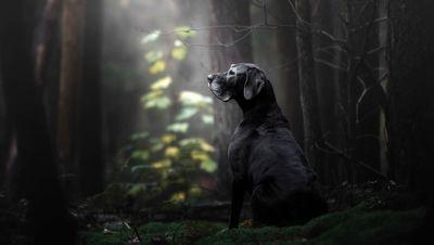 سگها: برترین عکسهای فستیوال 2018 کِنِل +تصاویر دیدنی