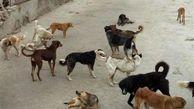 هجوم سگهای گرسنه به محلات گناوه در بوشهر