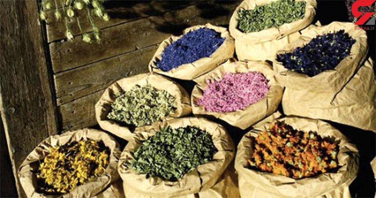 بهره برداری از مزرعه کشت گیاهان دارویی در نمین