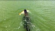 تمساح زبل پسر بچه کوچک را برای ناهار خود شکار کرد +فیلم