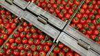 صادرات گوجه فرنگی آزاد شود