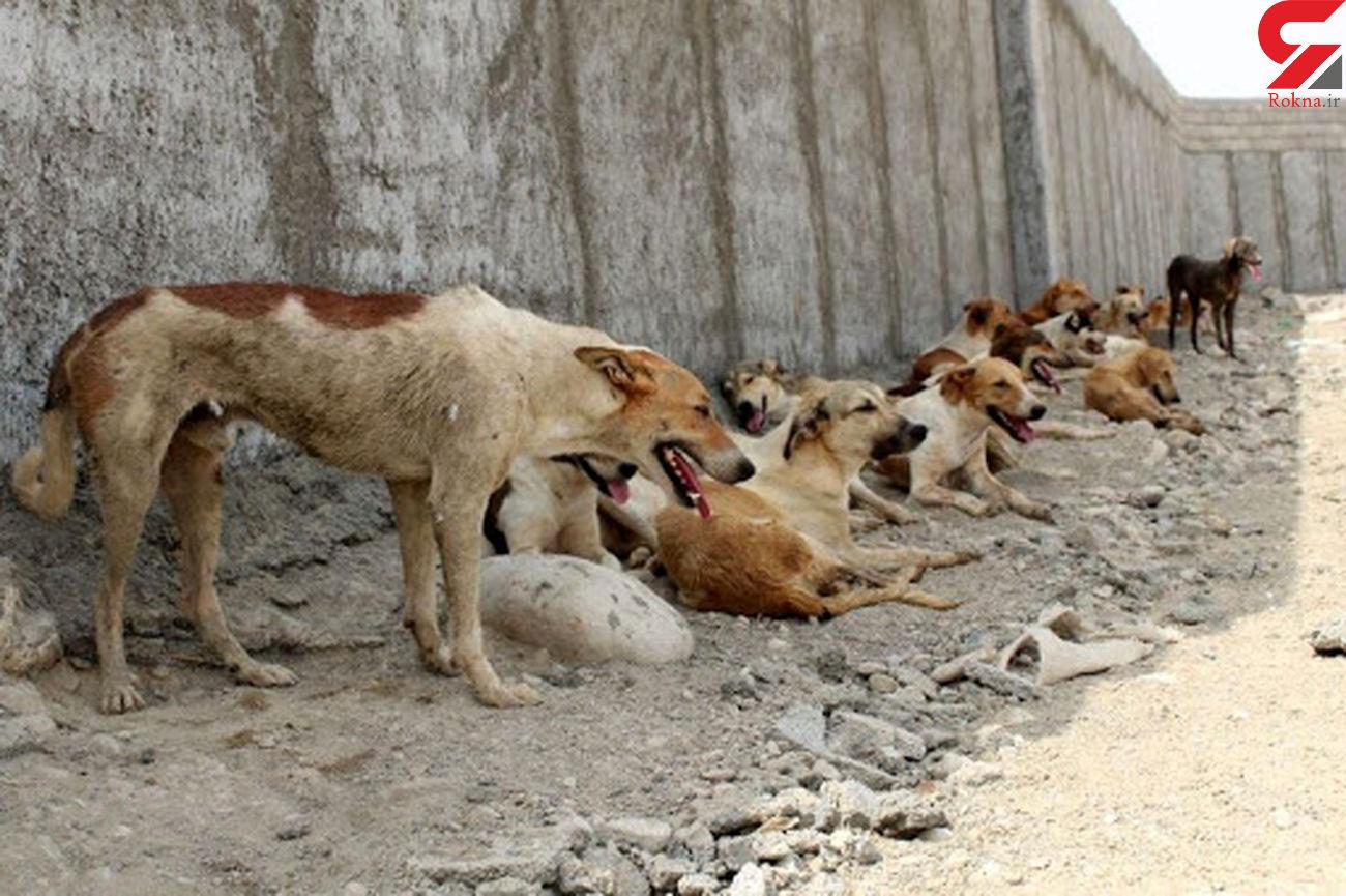دهها هزار امضا برای توقف کشتار و آزار حیوانات