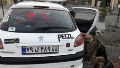 هلال احمر هیچ سگ زندهیابی را نمیفروشد + فیلم