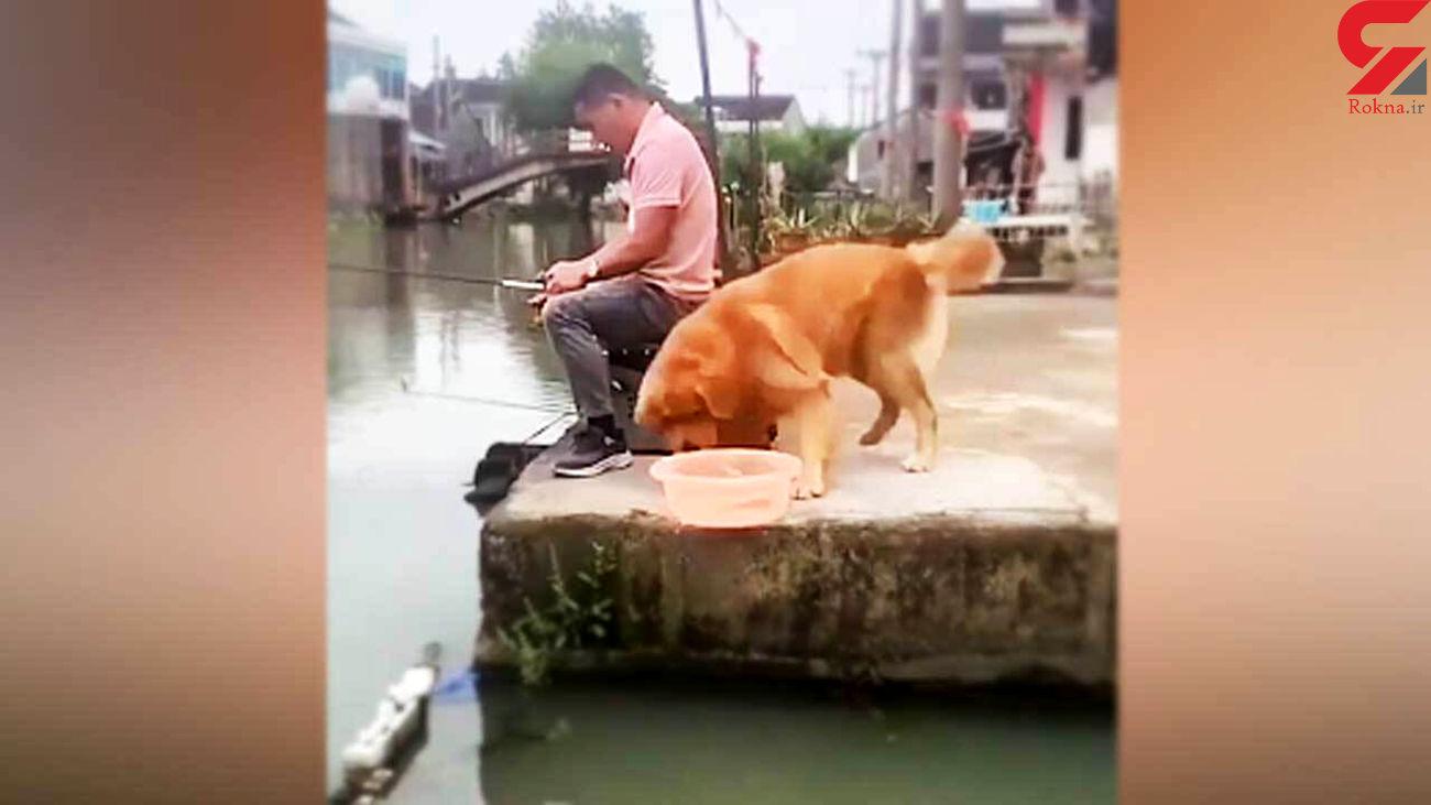 دلسوزی جالب سگ برای نجات ماهی از چنگ صیاد + فیلم