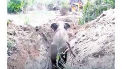نجات فیل از چاه + عکس