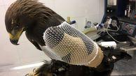 عکس/ حمله وحشتناک شاهین به یک اردک