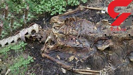 عجیب ترین و مخوف ترین جنازه ها را ببینید!+عکس های وحشتناک