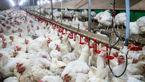 کمبودی در تولید مرغ نداریم