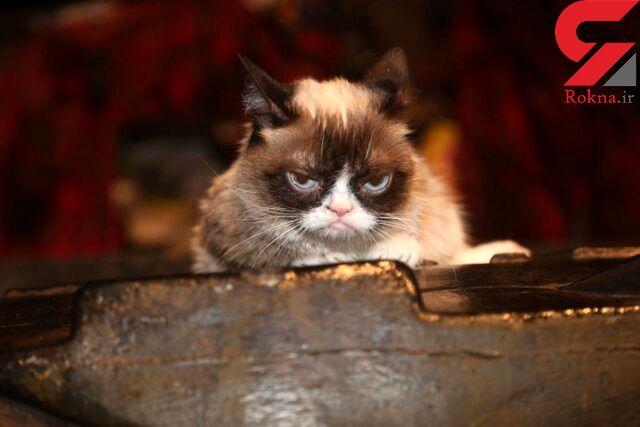 درگذشت گربه اخمو مولتی میلیونر اینستاگرامی + عکس