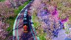 دریای گل در اوایل بهار چین + تصاویر