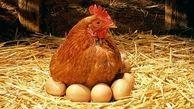 کنترل بازار مرغ و تخم مرغ تا شب عید ادامه دارد / مردم خیالتان راحت باشد